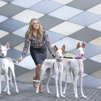 Faraonų laikus menantys itin reti Ibisos veislės šunys – jų Lietuvoje yra vos 9!
