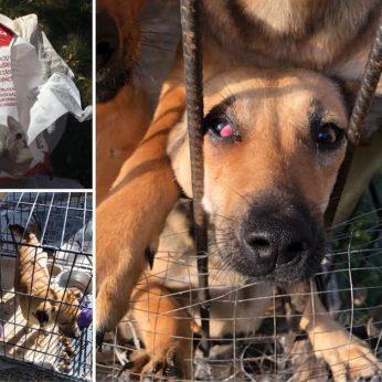 Gyvūnų prieglaudoje tragiška situacija nevalytuose narvuose alkani ir neprižiūrėti beglobiai