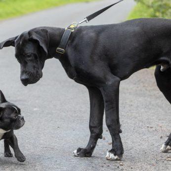 Ištyrė, kiek tiksliai žmonės suvokia, ką urgzdamas nori pasakyti šuo