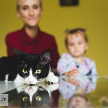 Keturkojį draugą iš gausybės Lilija rinkosi pati, bet iš tikrųjų tai kačiukas mus išsirinko
