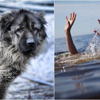 Pamatykite, kaip didžiulis šuo išgelbėjo mergaitę nuo vandenyno bangų