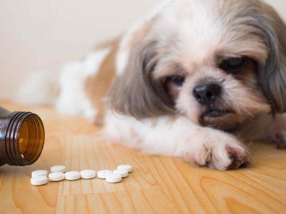 Žmogiški vaistai gyvūnams – PAVOJUS!!!