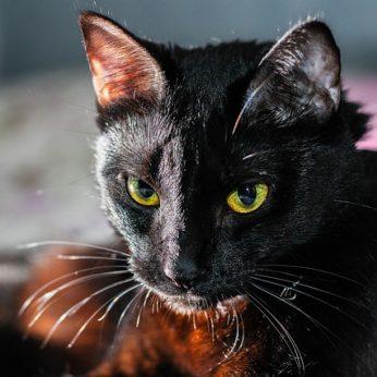 17 priežasčių, kodėl jūs turėtumėte įsigyti juodą katę