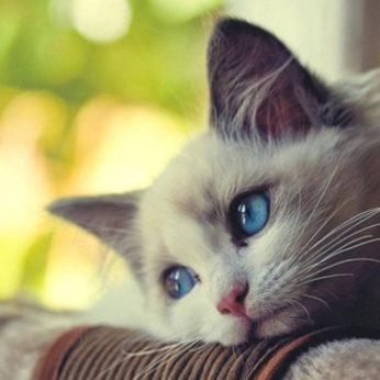 Daugelis mano, kad katės tokie gyvūnai, kurie nejaučia prisirišimo ir didelių jausmų savo šeimininkui. Jie mano, kad jos gali puikiai išbūti vienos namuose ir neliūdėti. Dėl to, daugelis keliauja į darbą ar išvažiuoja kelioms dienoms iš namų, palikdami savo keturkojes karaliauti vienoms namuose. Vis dar laikomasi nuomonės, kad katės yra meilios tik dėl maisto, šiltesnio guolio sau ar nugaros pakasymo. Kaip tai neteisinga... Ar tikrai tai tik savanaudis ir gudrus gyvūnas, kuris rūpinasi tik savo išlikimu? Katės ir katinai sugena mylėti ir labai stipriai! Galbūt jos to neparodo tinkamai, tačiau jų jausmai tikri ir nuoširdūs. Dauguma sakysite, negi sunku katei pabūti vienai, juk ji didžiąją dienos dalį pramiega. Taip, jos miega, daug miega, bet išėjus šeimininkui iš namų taip pat labai liūdi ir pasiilgsta. Pasiilgsta ne tik pilno dubenėlio maisto, pasiilgsta žmogaus dėmesio, bendravimo bei švelnumo ir rūpesčio.