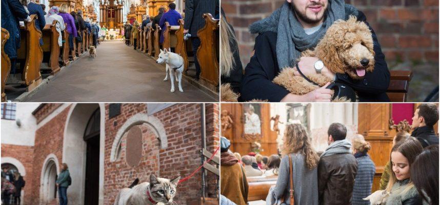 Bernardinų bažnyčia duris atvėrė keturkojams: laimino augintinius