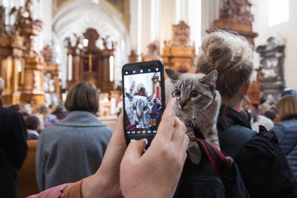Bernardinų bažnyčioje sekmadienį – kelios dešimtys keturkojų. M.Ambrazo nuotr.