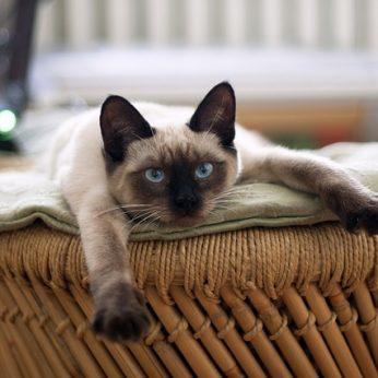 Katė – kleptomanė: per porą mėnesių iš kaimynų pavogė kelias dešimtis vyriškių apatinių ir kojinių