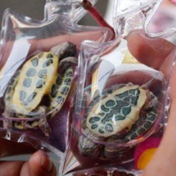 Kinijoje pardavinėjami raktų pakabukai su gyvais vėžliais ir žuvimis