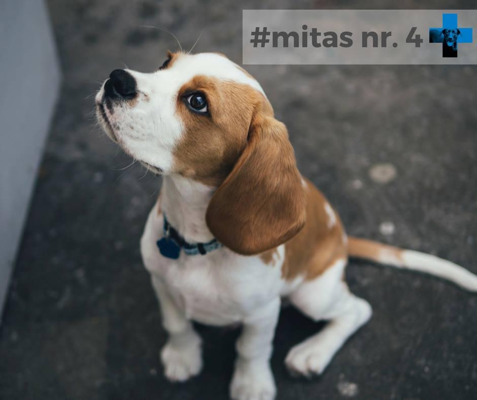 Mitas nr. 4. Po kastracijos šuo pradeda dažniau sirgti ir reikės dar dažniau kreiptis į veterinarijos gydytojus.