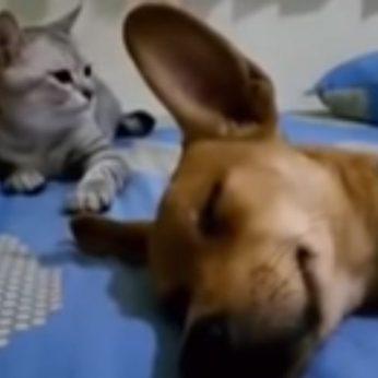 Netikėtas šuns išleistas garsas supykdė katę ir sukėlė netikėtą reakciją
