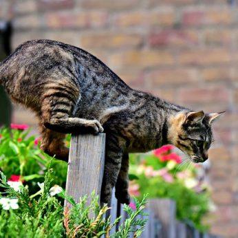 Paslaptingi kačių keliai