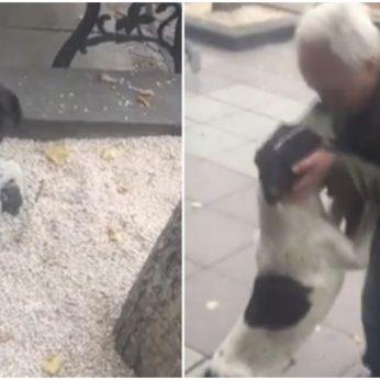Prieš trejus metus pasiklydęs šuo vėl susitiko su šeimininku: džiugi akimirka privers išspausti ašarą