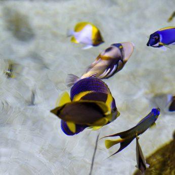 Ruošiatės įsigyti akvariumą? Sužinokite, kokios žuvytės populiariausios