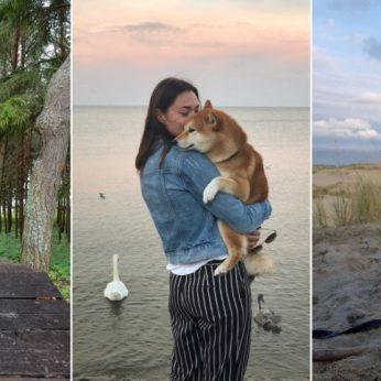 Šiba inu veislės šunys: egocentriški, nepriklausomi ir nelinkę meilikauti šeimininkui