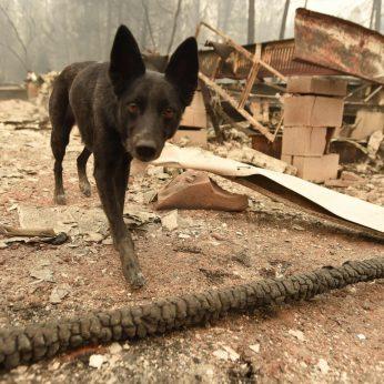 Šio šuns misija – suspaus širdį: to nenorėtų daryti joks žmogusŠio šuns misija – suspaus širdį: to nenorėtų daryti joks žmogus