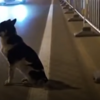 Širdį spaudžiantis vaizdas: šuo tris mėnesius laukia žuvusio šeimininko