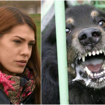 Šuniui kraupiai apdraskius vaikus griežta dresuotojos žinia