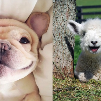 11 besišypsančių gyvūnų, kurie ir jus privers nusijuokti