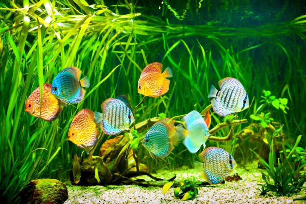 Akvariumo augalai. 123rf.com asociatyvioji nuotr.