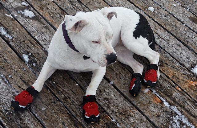 Ar reikia šunims batų