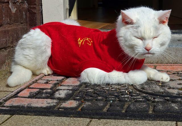 Butuose gyvenantys katinai nepratę šalti ir jų kailis nėra prisitaikęs būti ilgai lauke, nesusiformavęs povilnis, kuris juos sušildytų. Taigi, katinui, mėgstančiam palakstyti po sniegą ar balas, apranga taip pat yra būtina.