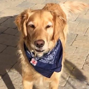 Fritzas – pats nerangiausias ir kerėpliškiausias šuo pasaulyje