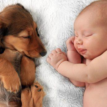 Ištyrė su šunimis augančių vaikų kraują: rezultatai nustebino