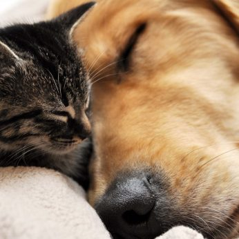 Katė ar šuo kaip pasirinkti