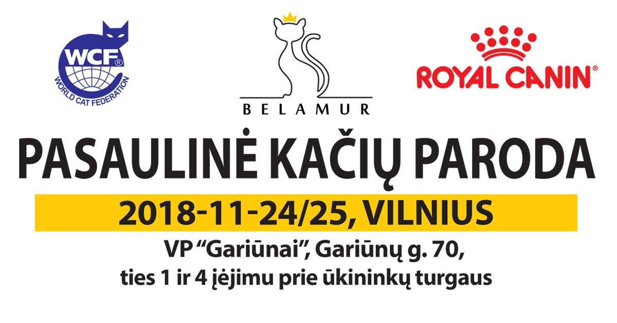 Pirmą kartą Lietuvoje Belamur Pasaulinė kačių paroda