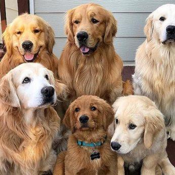 Savo šuniui dievas esate ne visada – yra dalykų, kurių jis nekenčia