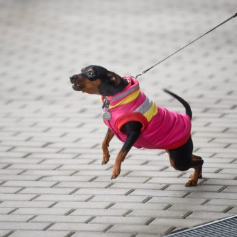 Seimas nereguliuos šunų lojimo ir kačių kniaukimo