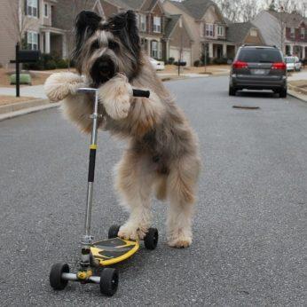 Stulbinantys šunų talentai dešimt keisčiausių Guinnesso rekordų