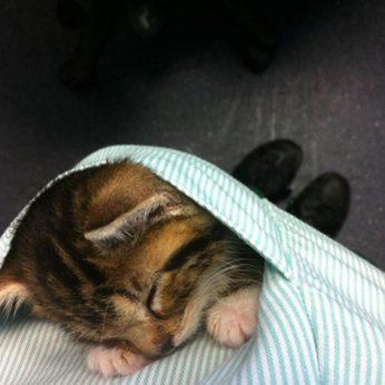 kačiukas kišenėje nuotaikingos gyvūnų fotogafijos