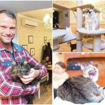 Čia kyla pavydo scenos, braižomi meilės trikampiai – kačių mylėtojai dievina šią vietą Vilniuje