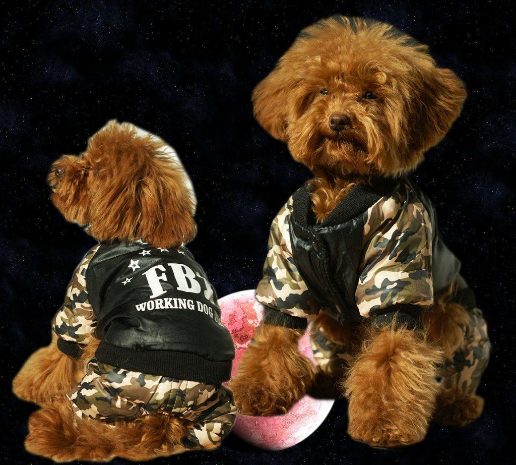 Darbo šuo- rimtas šuo. Šilta ir patogi striukė uždengianti ir galines kojas.Dydžiai - M, XL.