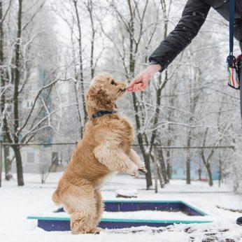 Šunų dresavimo paslaptys iš vieno geriausių dresuotojų pasaulyje