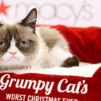 """""""Pikta"""" katė įgimtą defektą pavertė 100 mln. dolerių"""