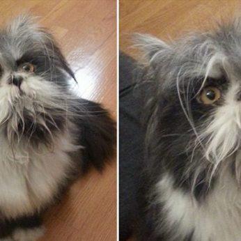 Internautams ramybės neduodanti nuotrauka: katė tai ar šuo?