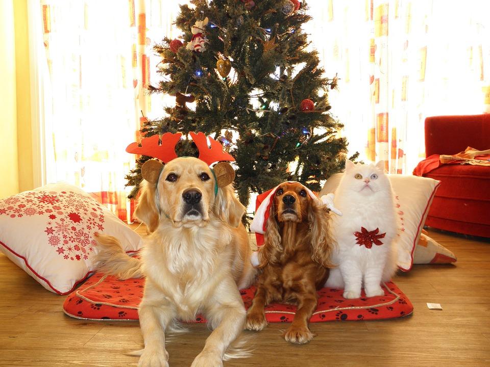 Ką dovanosime šiais metais savo augintiniams Geriausia kalėdinė dovana Jūsų gyvūnui