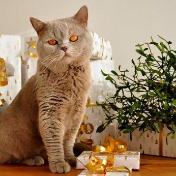 Ką dovanosime šiais metais savo augintiniams? Geriausia kalėdinė dovana Jūsų gyvūnui!