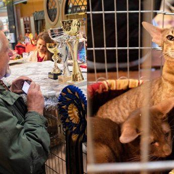 Kačių mylėtojai rinkosi Panevėžyje žvilgsnius traukė retai matomos murklės
