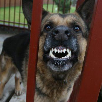 Kraupus įvykis Vilniaus r. šuo nukando 1,5 metų mergaitei pirštą