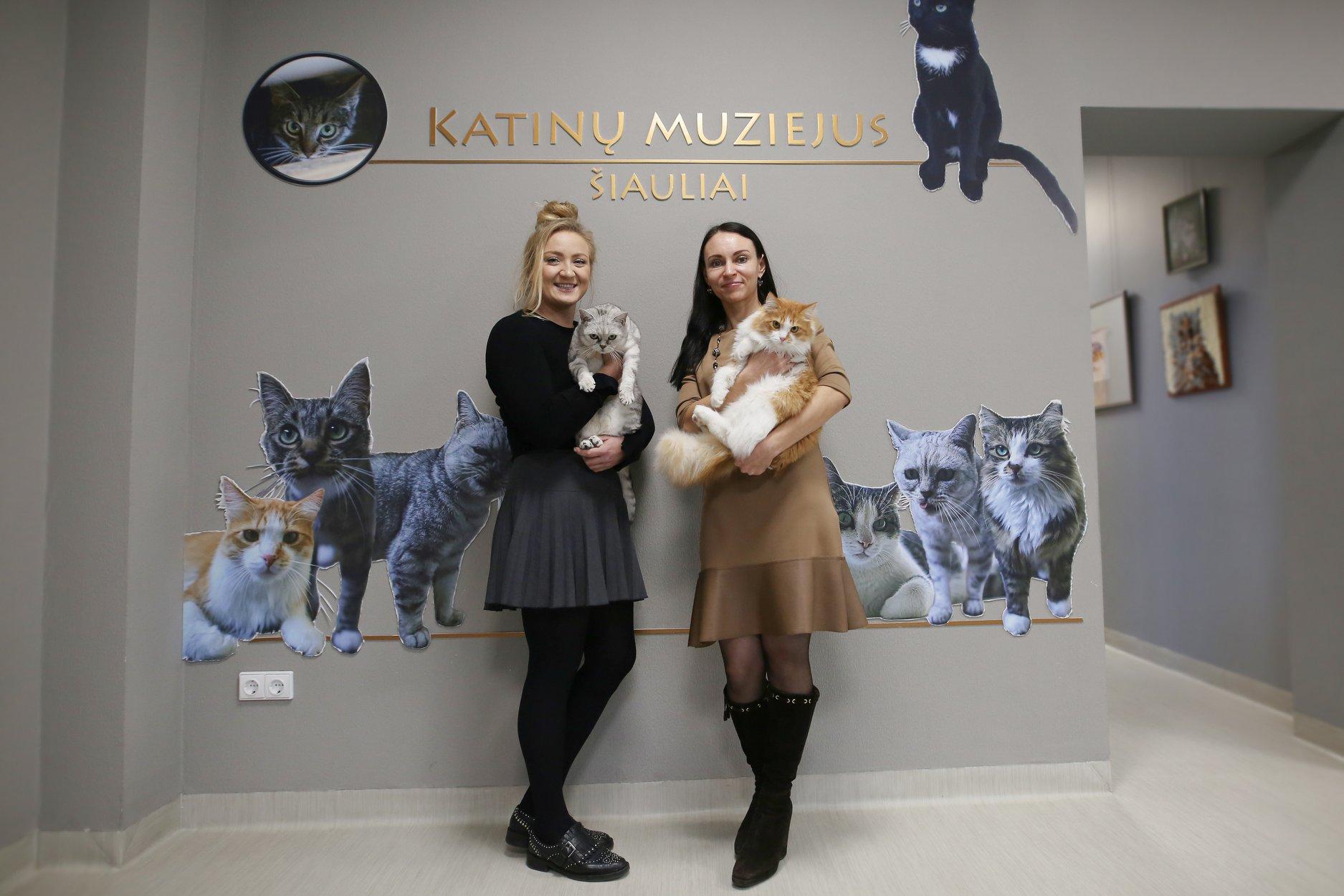 Kviečiame į atsinaujinusį Vandos Kavaliauskienės Katinų muziejų