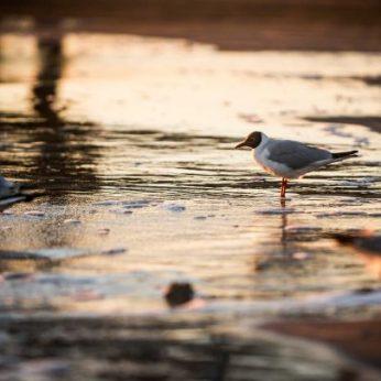 Nuvykę į Palangą įdėmiai klausykitės: paukščių giesmės čia skamba ir žiemą