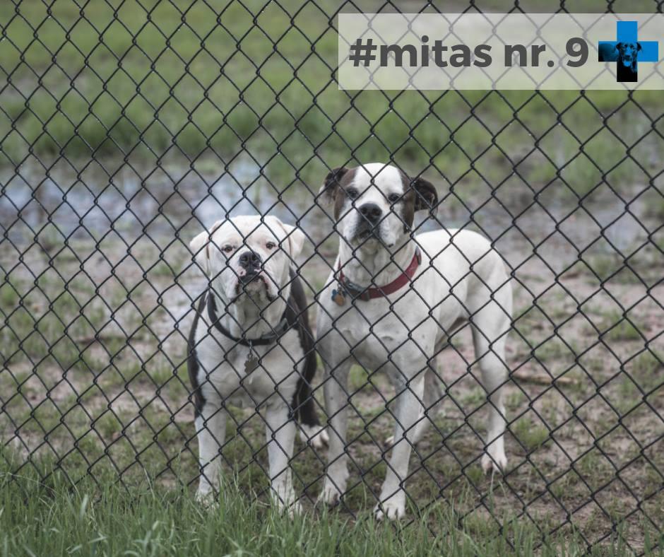 Mitas nr. 9. Po operacijos šuo nebesaugos namų bei šeimos