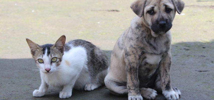 VMVT pataria būkite atidūs įsigydami gyvūnus augintinius