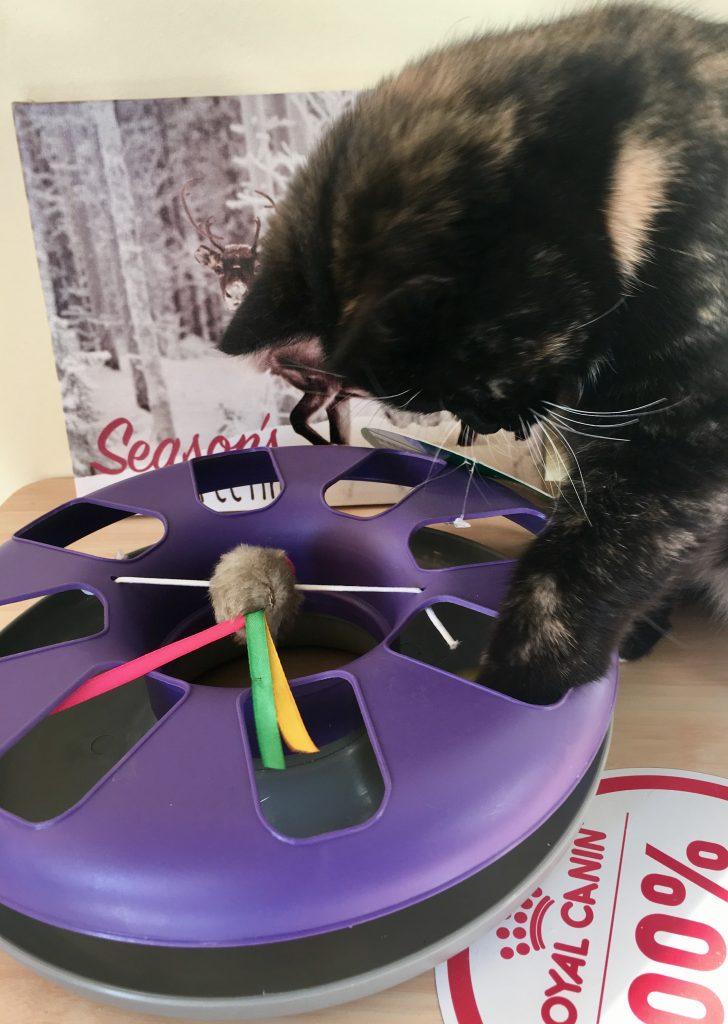 Interaktyvus žaislas katėms. Santakos veterrinarijos klinika Kaune