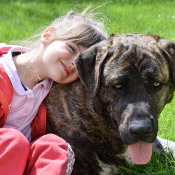 Šunų veislės, labiausiai tinkančios šeimai su vaikais
