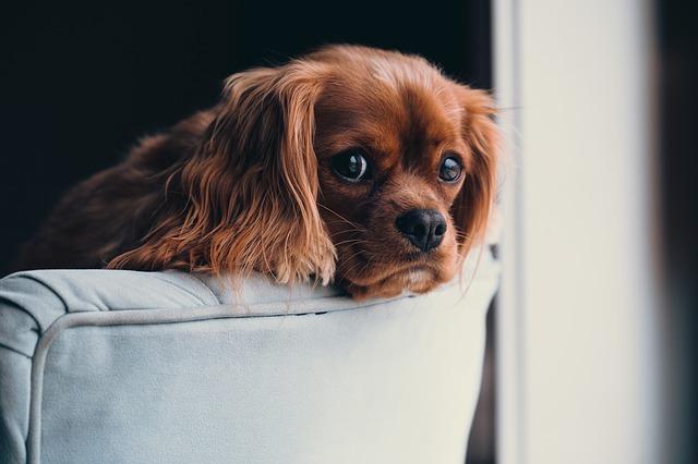 Šuns priežiūra Jūsų namuose (Dogsitting). Galima ir naktinė priežiūra šunims, kurie stresuoja ar loja palikti vieni. Kačių ir kitų gyvūnų priežiūra Vilniuje.