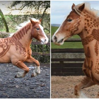 Žirgų kirpėja ir stilistė savo darbais stebina pasaulį